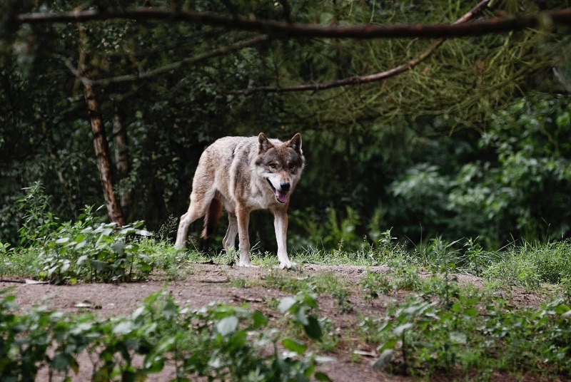 Wildpark Wolfspark