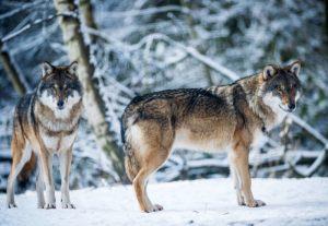 Wildpark-Schorfheide_05