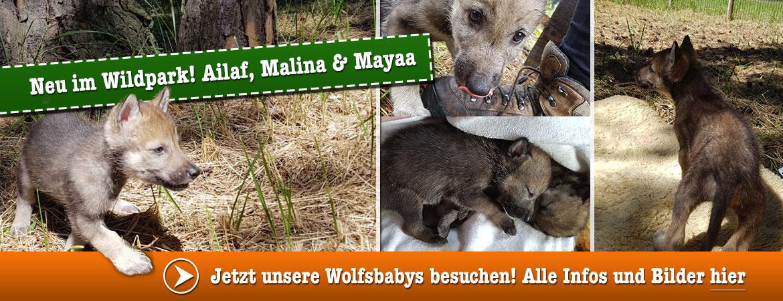 Wolfsbabys